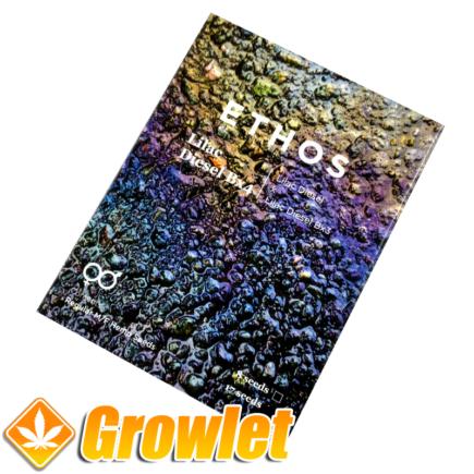 Lilac Diesel Bx4 de Ethos Genetics