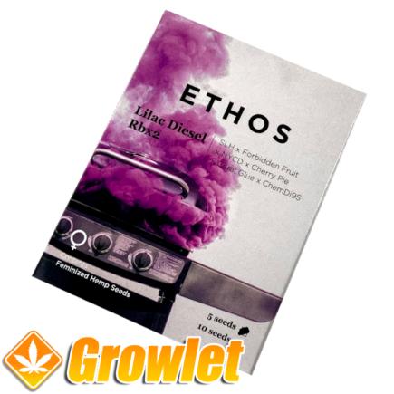 Lilac Diesel RBx2 de Ethos Genetics