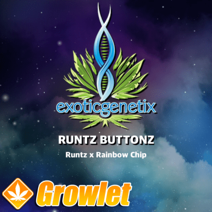 Runtz Buttonz de Exotic Genetix
