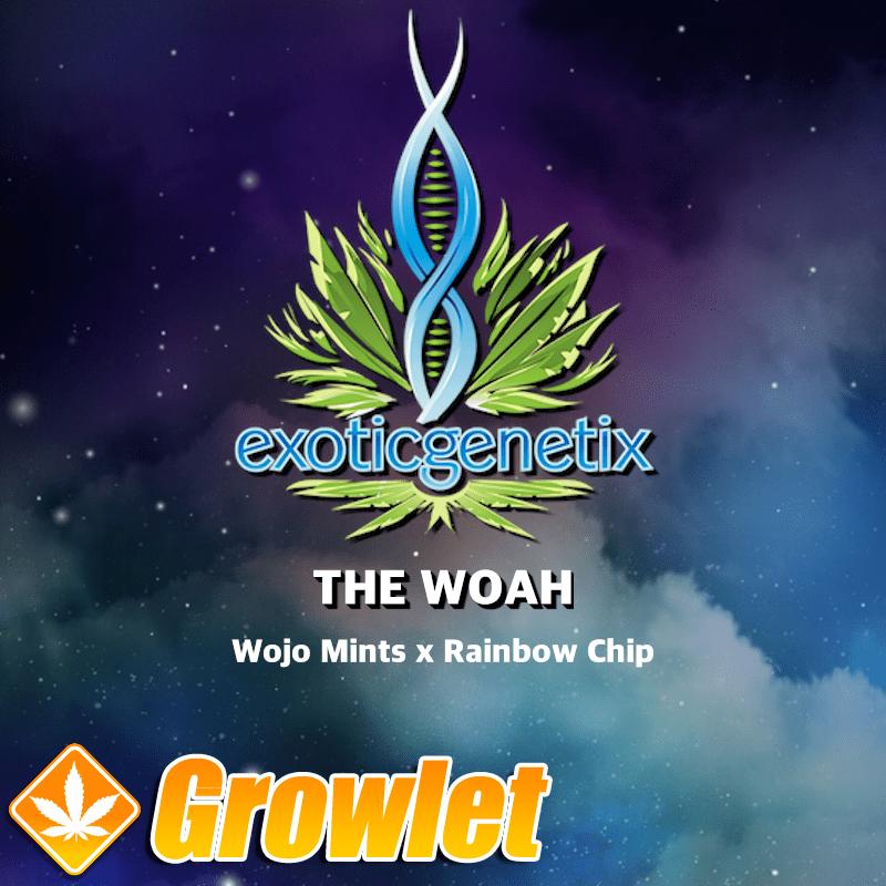 The Woah Exotic Genetix