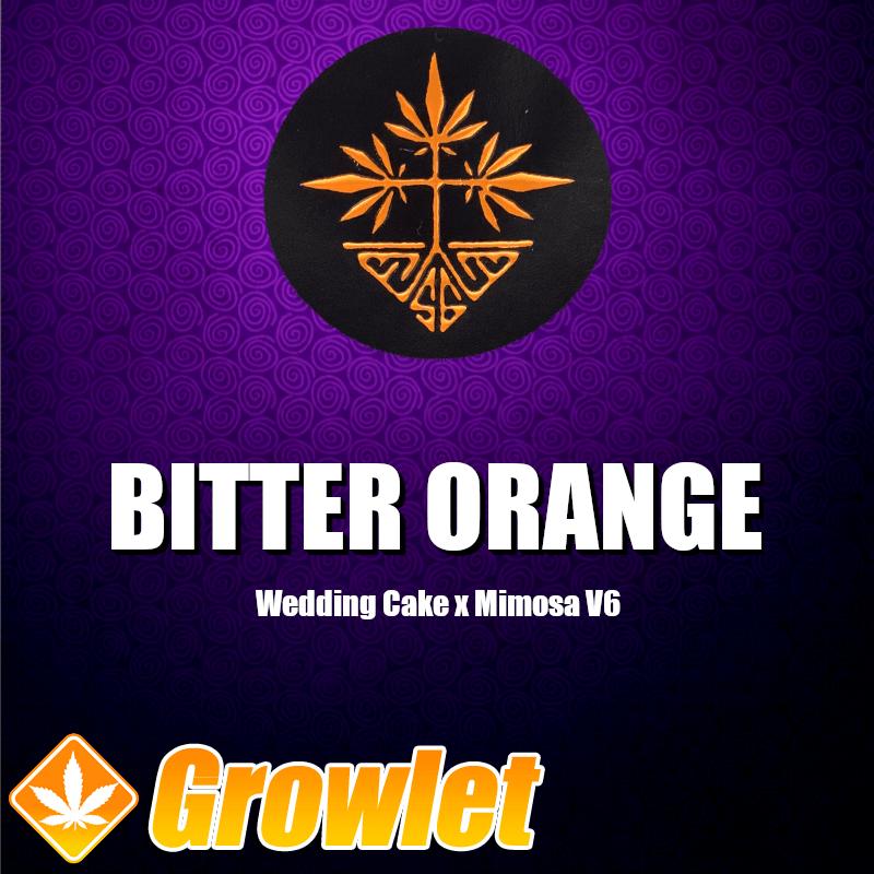 Bitter Orange semillas feminizadas de cannabis