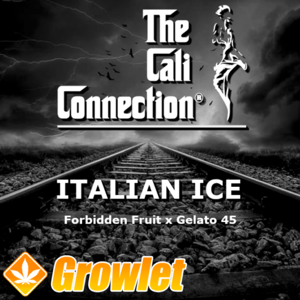 Italian Ice semillas feminizadas de cannabis