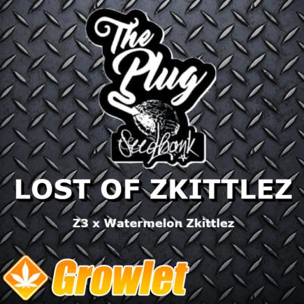 Lost of Zkittlez semillas feminizadas de cannabis