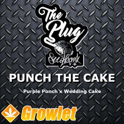 Punch The Cake semillas feminizadas de cannabis