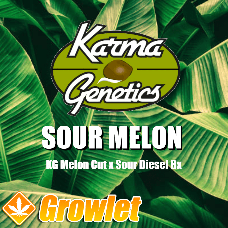 Sour Melon semillas regulares de cannabis