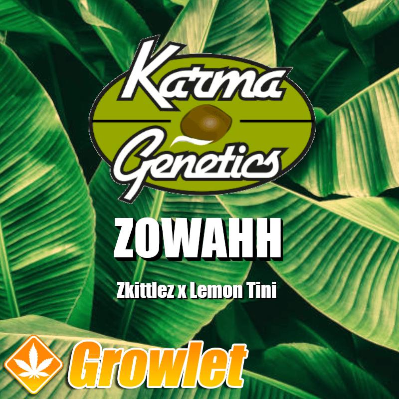 Zowahh semillas regulares de cannabis