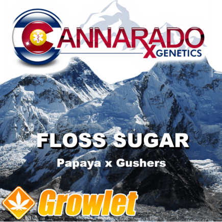 Floss Sugar semillas feminizadas de cannabis