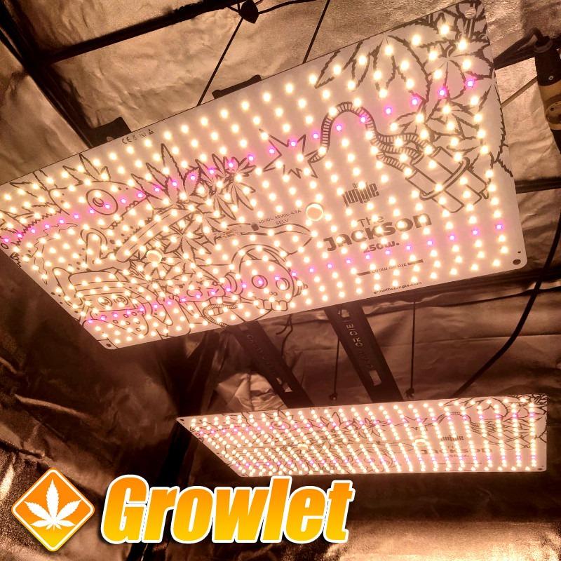 Lianas: Accesorio de union paneles LED Grow The Jungle