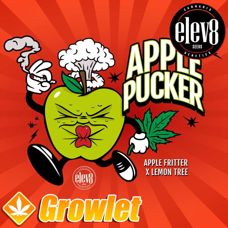 Apple Pucker semillas feminizadas de cannabis