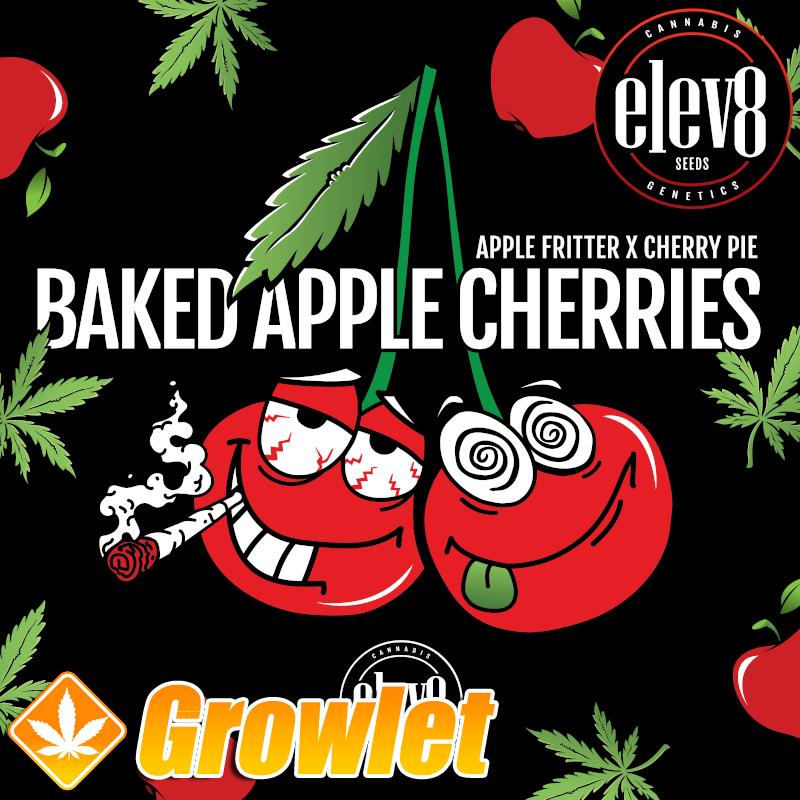 Baked Apple Cherries semillas feminizadas de cannabis
