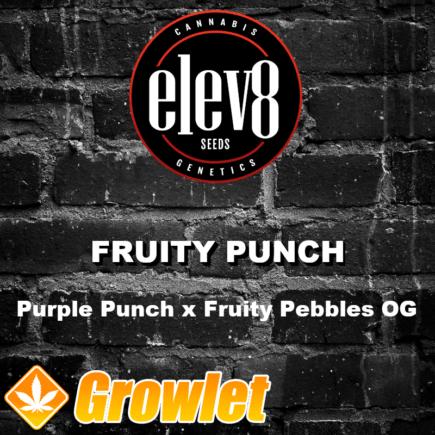 Fruity Punch semillas feminizadas de cannabis