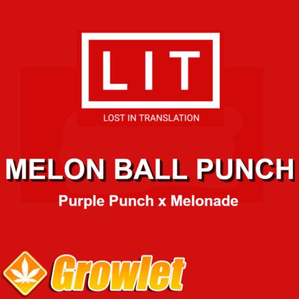 Melon Ball Punch semillas regulares de cannabis