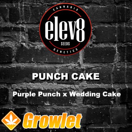 Punch Cake semillas feminizadas de cannabis