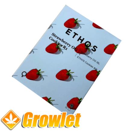 Strawberry Cookies OG R1 semillas feminizadas de cannabis