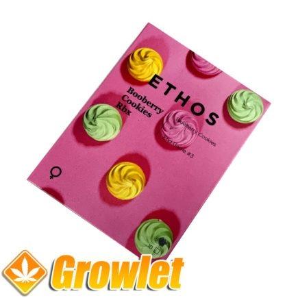 Booberry Cookies RBX semillas feminizadas de cannabis