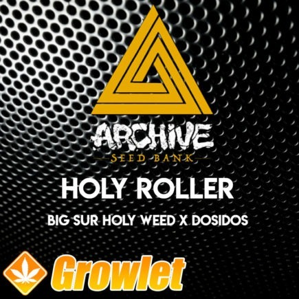 Holy Roller semillas regulares de cannabis