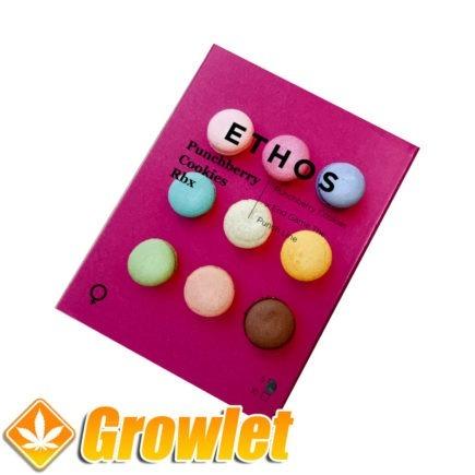Punchberry Cookies RBX semillas feminizadas de cannabis