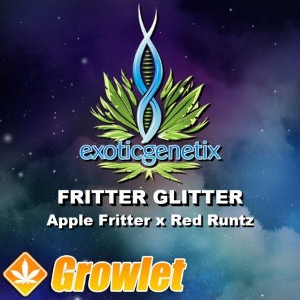 Fritter Glitter semillas feminizadas