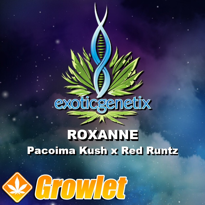 Roxanne semillas feminizadas de cannabis